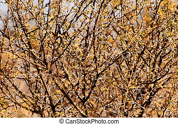 Bushveld Thorn Tree Mesh - Bushveld Thorn Bush Branches with...