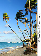 Tropical beach - Tropical sandy beach with palm trees in...