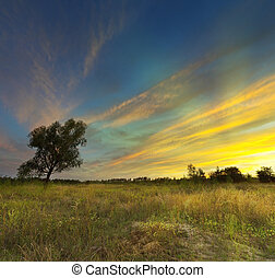 Sunset on meadow
