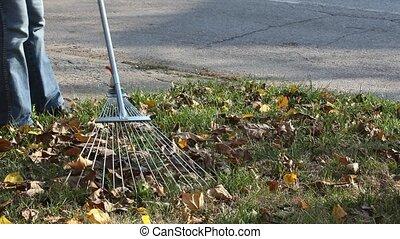 Autumn scene - Woman raking autumn leaves in a garden