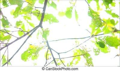 Leaves on Wind