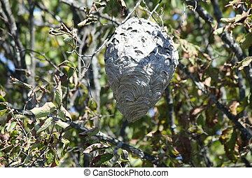 Hornets Nest in Tree