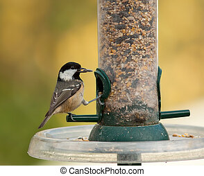 Coal Tit on a garden bird feeder