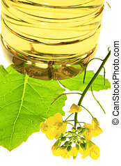 Canola plant Brassica napus - blooming Canola plant with a...