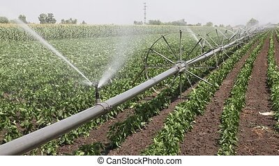 Agriculture - Watering of field, closeup of irrigation...