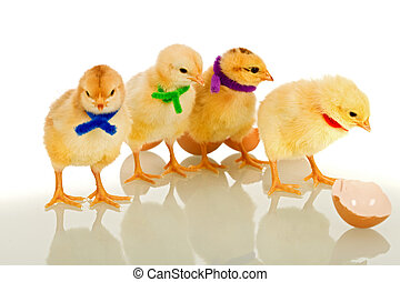 Colorful gang - small chicks with scarves - Colorful party...