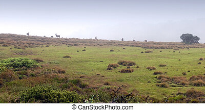 Misty morning, Horton Plains, Sri Lanka - Misty morning and...