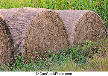 Hay bales in the countryside