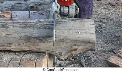 Lumber industry - Cutting wood with chainsaw