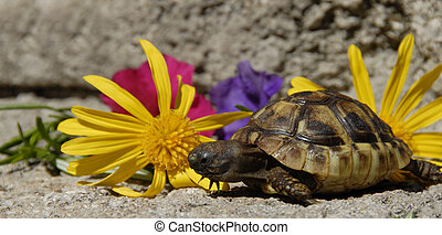 little turtle and flowers - beautiful little turtle herman...