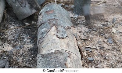 Lumber industry - Cutting wood with axe