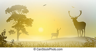 Male Stag Deer on a Misty Meadow with Tree and Sunset,...