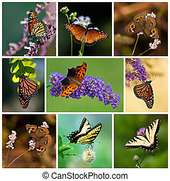 Butterfly Collage - Colorful butterfly collage representing...