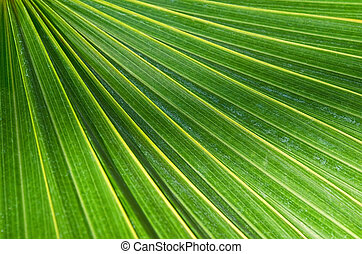 Palm tree leaf - Closeup of palm tree leaf pattern
