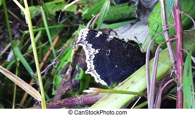 Butterfly on leaf, close up