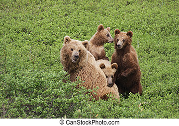 three cub and bear - three brown bear pressed against the...