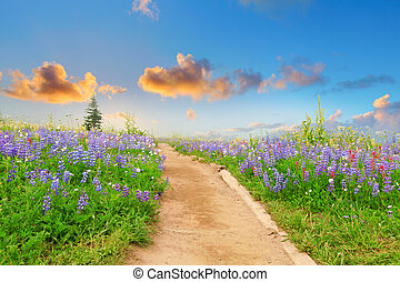 Hiking trail with wild flowers and sunset. Beautiful...