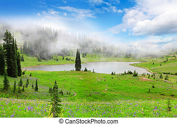 Green valley landscape with lake in fog with wild flowers.