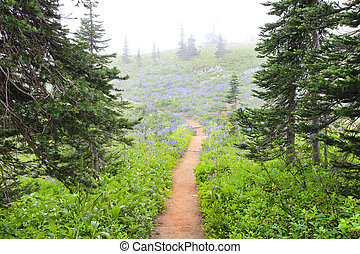 Fog in the NorWest forest hike trail with purple wild flowers.