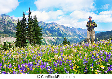 Male hiker walking the trail in the mountains with  wild flowers in purple and yellow.