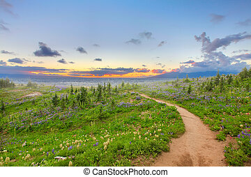 Hiking trail with wild flowers and sunset. Beautiful landscape with dreamy feel.