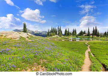 Wild flowers, hiking trail and lake at the Mt Ranier...