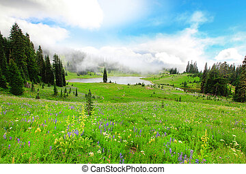 Green valley with wild flowers and lake in the fog. Mt.Rainier National Park area.