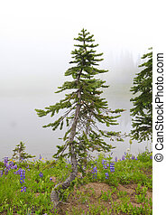 Small pine tree and wild flowers in the fog.