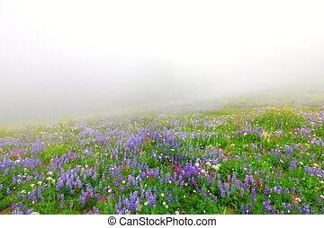 Wild flowers blooming in the fog near Mt Rainier in North...