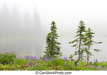 Three small pine trees near lake with flowers and fir trees.