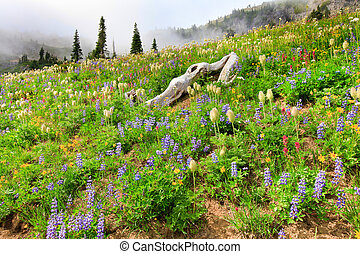 Mountain covered in wild flowers with fog and trees -...