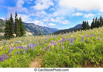 Naches Peak Loop Trail near MtRanier hiking trail with wild...