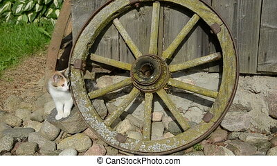 kitten and old carriage wheel