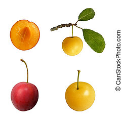 mirabelle fruit - mirabelle yellow and red plum set isolated