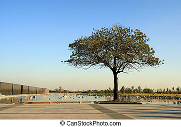 tree on the edge of a square