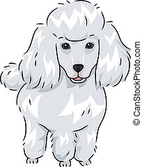 Poodle - Illustration Featuring a Cute and Furry Poodle