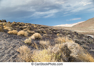 death valley national park,california,USA-august...