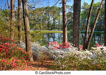 Azalea lake - Idyllic setting of tranquil lake at Callaway...