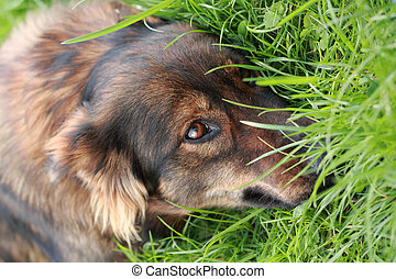 very nice dog in the green grass