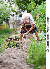 Old woman in the garden, weeding - Old rural woman weeding...