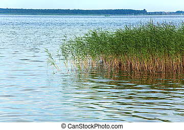 Summer rushy lake view with plants on water surface