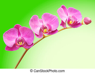 Orchid vector flower illustration
