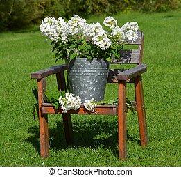 White flowers 1 - A beautiful flowers in a Zinc bucket