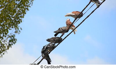 Birds on a wire. Close view