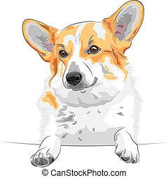 vector sketch dog Pembroke Welsh corgi smiling - color...