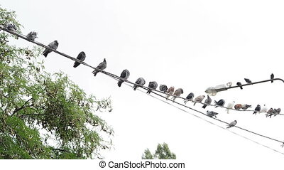 Much birds on a wire