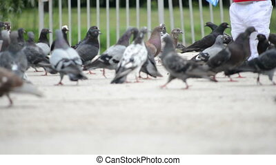 Children play with doves in a park