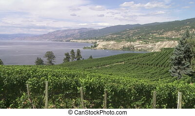 Vineyard above Lake Okanagan - Lake Okanagan and vineyard...