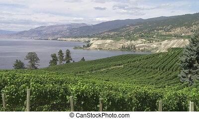 Vineyard above Lake Okanagan - Pan left of Lake Okanagan and...