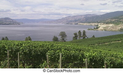 Vineyard above Lake Okanagan - Pan right of Lake Okanagan...
